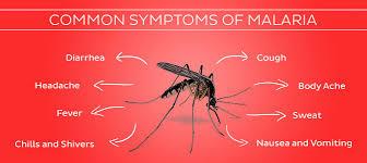 a Plasmodium malária életformái)