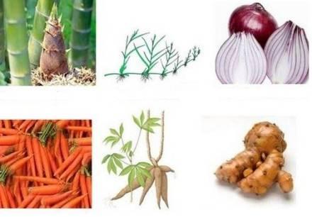 Reproduksi Vegetatif Alami Dan Buatan Yang Ada Pada Tumbuhan Penjaskes Co Id