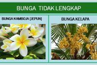 Apa Contoh Bunga Tidak Lengkap Jelaskan Penjaskes Co Id